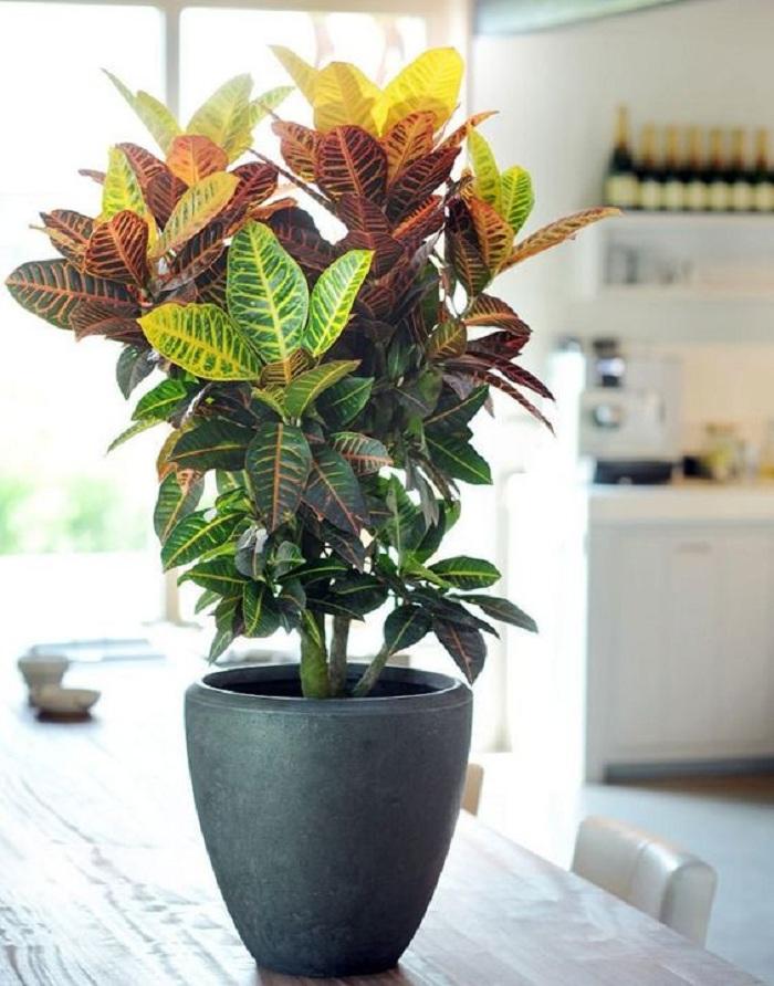 plantas 5